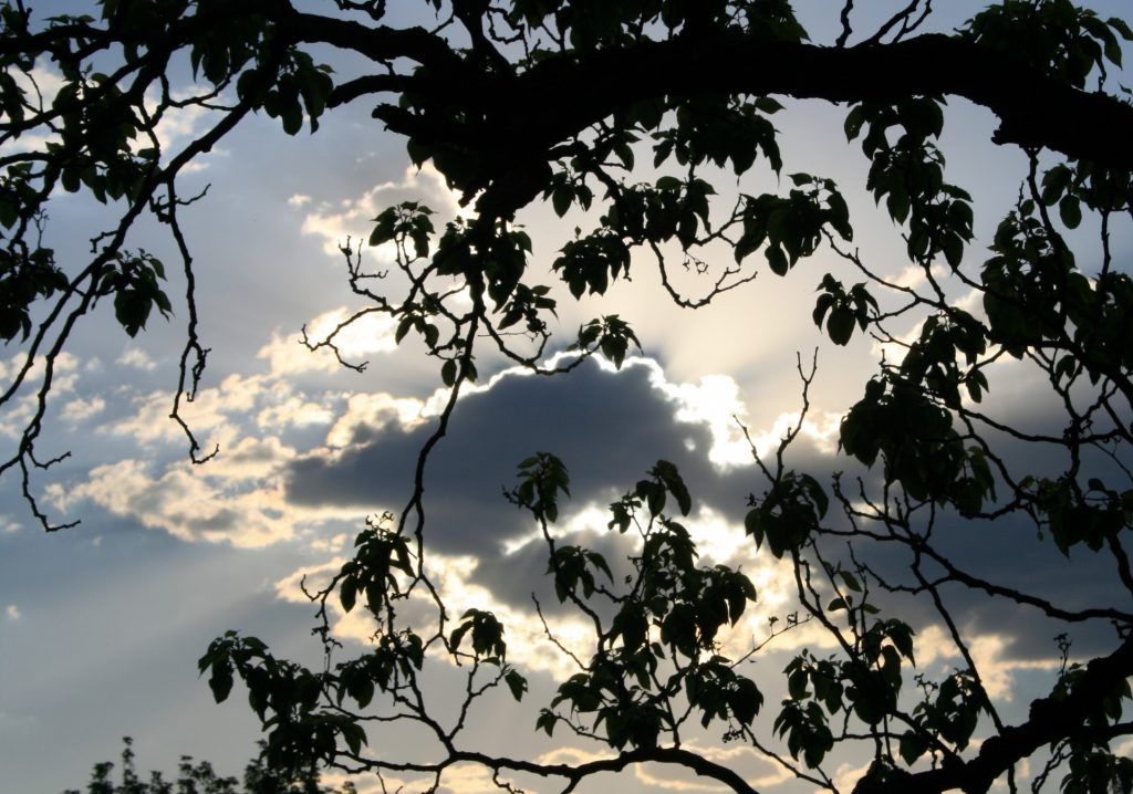 shining-clouds-behind-foliage